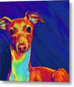Italian Greyhound  Metal Print by Jane Schnetlage