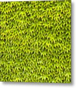 Ivy Wall Metal Print by Andy Smy