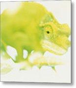 Jacksons Chameleon Color Metal Print by Carl Shaneff - Printscapes