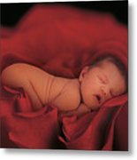 Jersey In Rose Metal Print by Anne Geddes