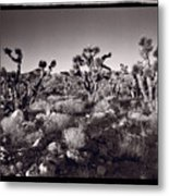 Joshua Tree Forest St George Utah Metal Print by Steve Gadomski