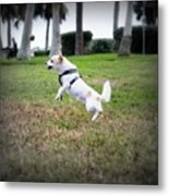 Jump Metal Print by Mandy Shupp