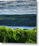 Keuka Vineyard I Metal Print by Steven Ainsworth