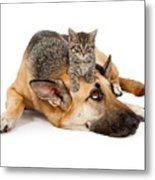 Kitten Laying On German Shepherd Metal Print by Susan  Schmitz