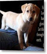 Labadore Puppy Is. 12v5 Metal Print by Linda Phelps