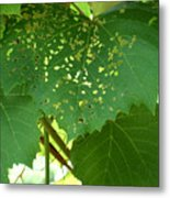 Lace In The Vines Metal Print by Mindy Newman