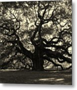 Last Angel Oak 72 Metal Print by Susanne Van Hulst