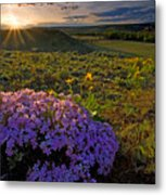 Last Light Of Spring Metal Print by Mike  Dawson