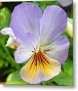 Lavender Pansy Metal Print by Nancy Mueller