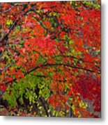 Layers Metal Print by Ed Smith