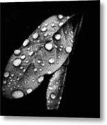 Leaf It Metal Print by Karen M Scovill