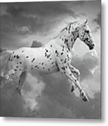 Leopard Appaloosa Cloud Runner Metal Print by Renee Forth-Fukumoto