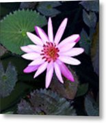 Lilly Pad Metal Print by Rebecca Cozart