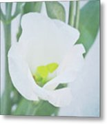 Lisianthus Metal Print by Angela Doelling AD DESIGN Photo and PhotoArt