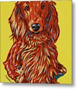 Long Haired Dachshund Metal Print by Nadi Spencer