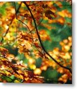 Lost In Leaves Metal Print by Kathy McClure