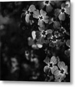 Love Lost Metal Print by Laurie Search
