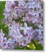 Lovely Lilacs Metal Print by Anna Villarreal Garbis