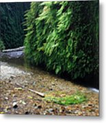 Lush Fern Canyon Metal Print by Pierre Leclerc Photography