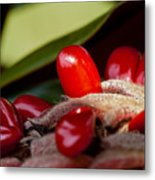 Magnolia Seeds Metal Print by Christopher Holmes
