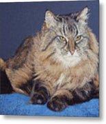 Maine Coon Kitty Metal Print by Kay Ridge