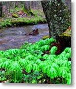 May-apples And Middle Fork Of Williams River Metal Print by Thomas R Fletcher