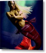 Midnight Delight Metal Print by Tray Mead