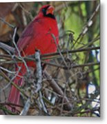 Mister Cardinal Metal Print by DigiArt Diaries by Vicky B Fuller
