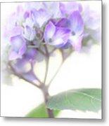 Misty Hydrangea Flower Metal Print by Jennie Marie Schell