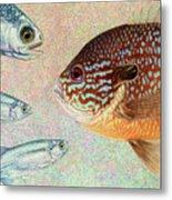 Mooneyes, Sunfish Metal Print by James W Johnson