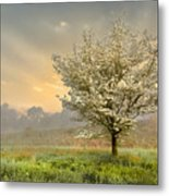 Morning Celebration Metal Print by Debra and Dave Vanderlaan