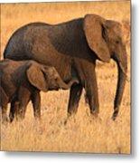 Mother And Baby Elephants Metal Print by Adam Romanowicz