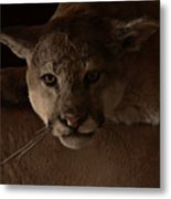 Mountain Lion A Large Graceful Cat Metal Print by Christine Till