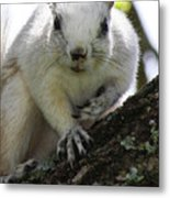 Mr. Inquisitive I  Metal Print by Betsy Knapp