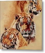 Nanook Metal Print by Barbara Keith