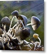 Nature Metal Print by Avalon Fine Art Photography