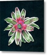 Neoregelia Terry Bert Metal Print by Penrith Goff
