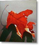 Oak Leaf 1 Metal Print by Timothy Jones
