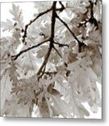 Oak Leaves Metal Print by Frank Tschakert