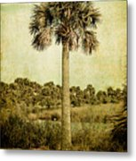 Old Florida Palm Metal Print by Rich Leighton