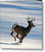 On The Run Metal Print by Todd Hostetter