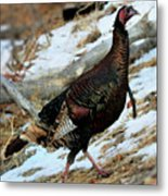 On The Run Metal Print by William Gillam