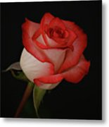 Orange And White Rose Metal Print by Sandy Keeton