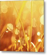 Orange Awakening Metal Print by Aimelle