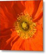 Orange Poppy Flower Metal Print by Julia Hiebaum