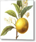 Orange Tree Metal Print by Granger