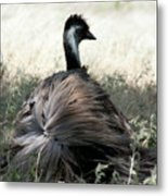 Ostracized Ostrich Metal Print by Douglas Barnard