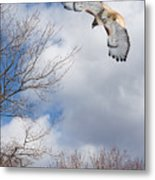 Out Of The Blue Metal Print by Bill Wakeley