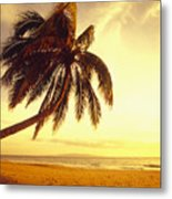 Palm Over The Beach Metal Print by Ron Dahlquist - Printscapes