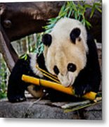 Panda Bear Metal Print by Robert Bales